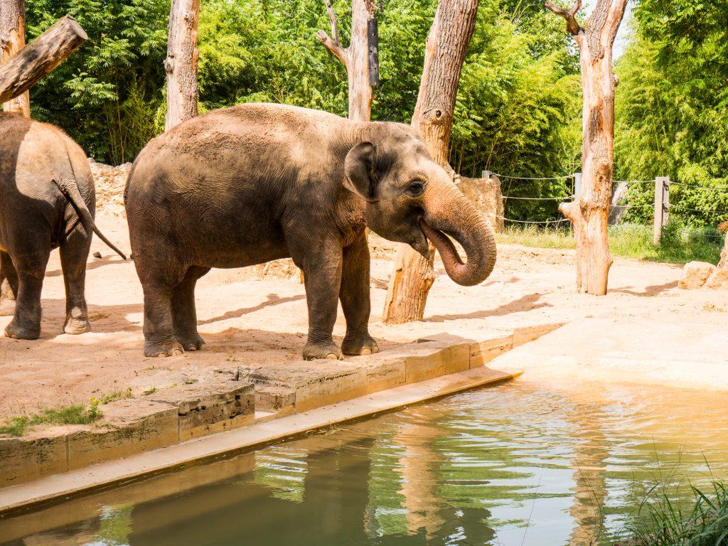 Elefant Wilhelma Stuttgart - Betriebsausflug Paul Lange